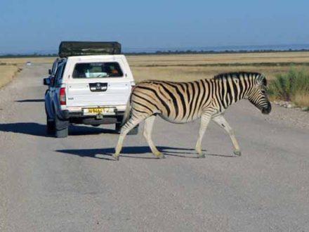 Afrika Erfahren, Südafrika, Allrad Camper, Selbstfahrer, Mietwagen, Rundreise, Zebra