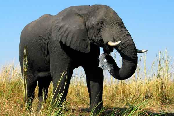 Afrika Erfahren, Selbstfahrer Rundreisen, Elefant