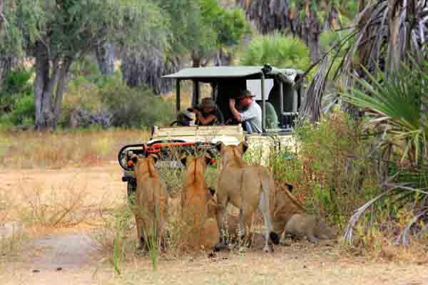 Afrika Erfahren, Südafrika, Krüger Nationalpark, Safari, Löwen, Strand