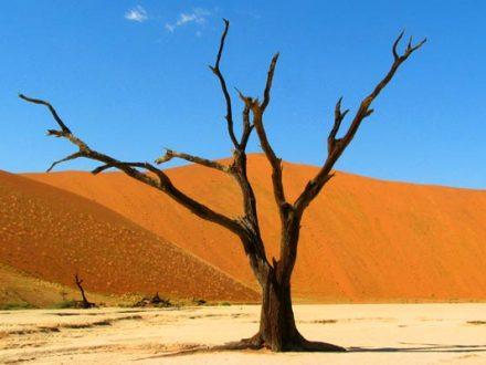 Afrika Erfahren, Namibia Wanderreise für Selbstfahrer, Dead Vlei Baum