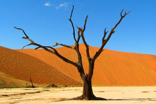 Afrika Erfahren, Namibia Rundreise für Selbstfahrer, Sossusvlei, Dead Vlei, Baum,Highlights