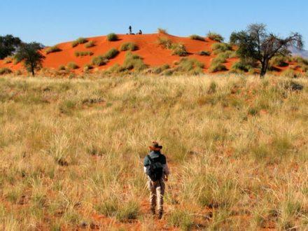 Afrika Erfahren, Namibia Wanderreise für Selbstfahrer, Tok Tokkie Wanderer, Wanderparadies