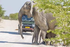 Namibia Rundreise Mietwagen, Etosha, Elefant und Safari Fahrzeug