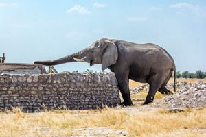 Namibia Rundreise Selbstfahrer im Etosha Nationalpark, Elefant trinkt am Wasserloch
