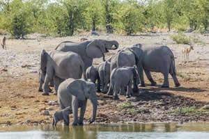 Afrika Erfahren, Namibia Rundreise Selbstfahrer, Etosha Nationalpark, Elefanten am Wasserloch