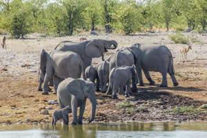 Afrika Erfahren, Namibia Rundreise Mietwagen, Etosha, Elefanten am Wasserloch