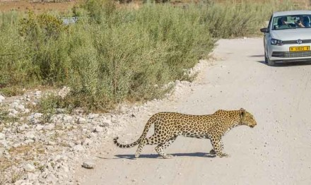 Afrika Erfahren, Namibia Safari, Selbstfahrer, Etosha Nationalpark
