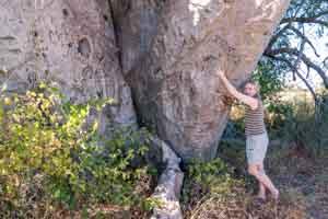 Afrika Erfahren, Botswana Rundreise Mietwagen Okavango Delta, Affenbrotbaum-Stamm