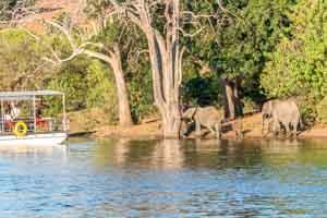 Afrika Erfahren, Botswana Safari, Okavango Delta, Elefanten vom Boot beobachten