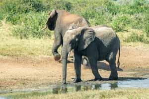 Afrika Erfahren, Namibia Safari, Okavango Delta, Elefanten