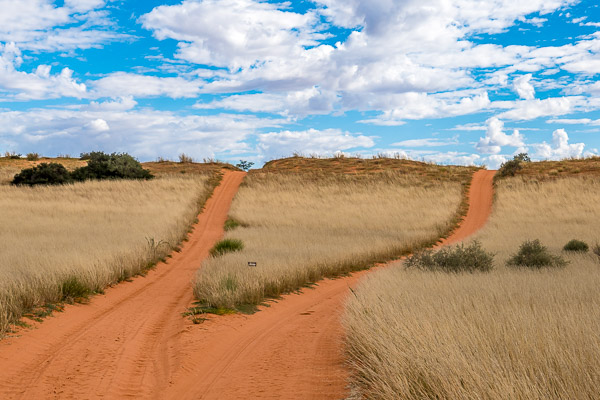 Afrika Erfahren, Südafrika, Selbstfahrer Rundreise, Kgalagadi Nationalpark