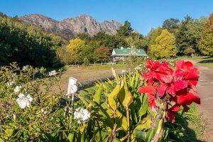 Afrika Erfahren, Südafrika, Selbstfahrerreise, Stellenbosch