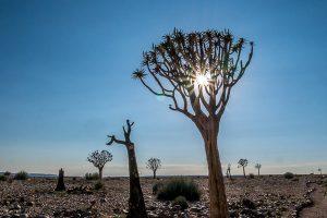 Afrika Erfahren, Namibia, Selbstfahrer, Köcherbäume