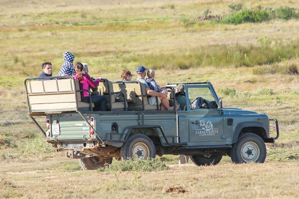 Afrika Erfahren, Südafrika, Garden Route Selbstfahrer, Safari Pirschfahrt