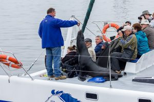 Afrika Erfahren, Namibia, Mietwagenreise, Bootsausflug mit Seelöwen