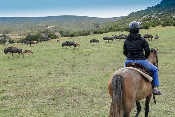 Afrika Erfahren, Südafrika, Mietwagen, Safari zu Pferd