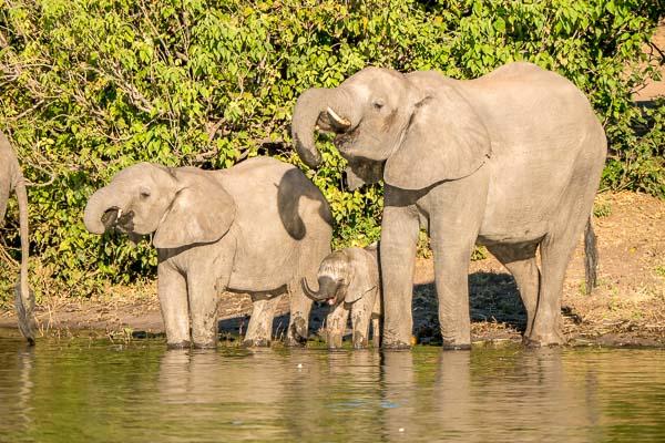 Afrika Erfahren, Botswana, Selbstfahrer Rundreise, Elefanten