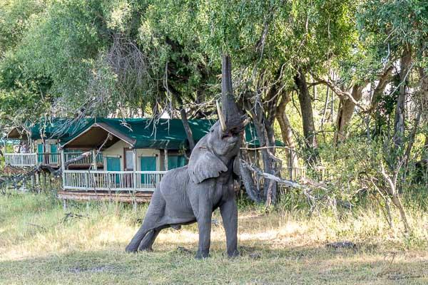 Afrika Erfahren, Botswana, Selbstfahrerreise, Elefant im Camp