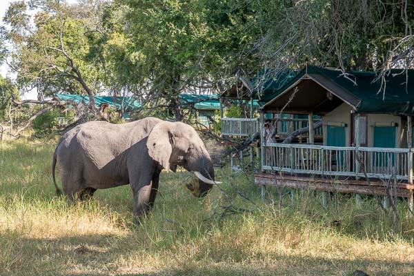 Afrika Erfahren, Botswana, Selbstfahrerreise, Moremi Crossing