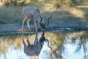 Afrika Erfahren, Namibia, Selbstfahrer, Kudu
