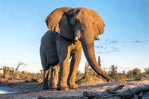 Afrika Erfahren, Namibia, Selbstfahrerreise, Elefant