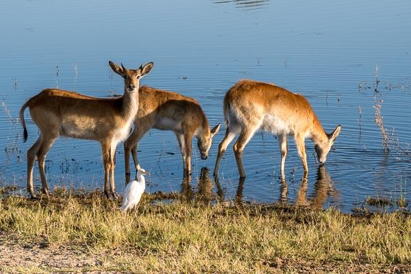 Afrika Erfahren, Namibia, Selbstfahrerreise, Moorantilopen