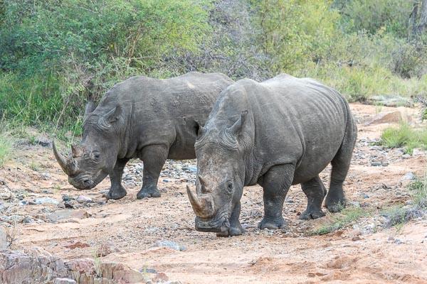 Afrika Erfahren, Südafrika, Selbstfahrer, Nashörner