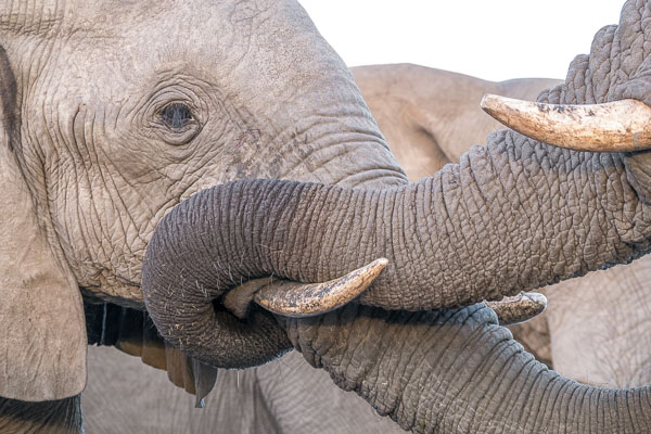 Afrika Erfahren, Südafrika, Selbstfahrer Rundreise, Elefanten