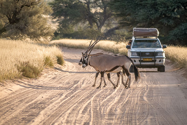 Afrika Erfahren, Südafrika, Selbstfahrer Rundreise, Oryx