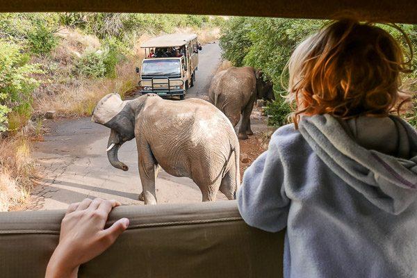 Afrika Erfahren, Südafrika, Familienreise, Kind,Elefanten, Safari