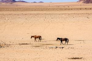 Afrika Erfahren, Mit dem Mietwagen von Windhoek nach Kapstadt, Garub, Wildpferde
