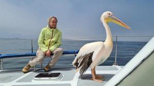 Namibia Selbstfahrer Rundreise Corona, Catamaran Tour, Swakopmund, Pelikan