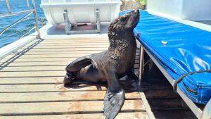 Namibia Selbstfahrer Rundreise Corona, Catamaran Tour, Swakopmund, Seehund