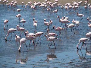 Namibia Selbstfahrer Rundreise Corona, Catamaran Tour, Swakopmund, Walvis Bay, Flamingo