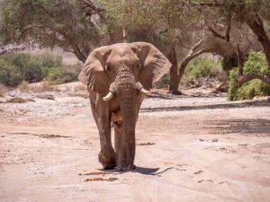 Namibia Rundreise Corona, Sesfontein, Hoanib, Sleepout, Elefant