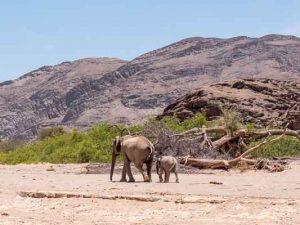 Namibia Rundreise Corona, Sesfontein, Hoanib, Sleepout, Elefanten, Afrika Erfahren