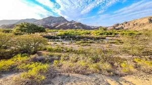 Namibia Rundreise Corona, Sesfontein, Hoanib, Sleepout, Flussbett