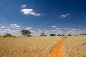 Namibia Rundreise Mietwagen Corona Selbstfahrer, Red Dunes Lodge, Trans Kalahari Walk, Wandern
