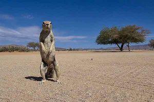Namibia Mietwagen Rundreise Selbstfahrer, Corona, Solitaire, Erdhoernchen