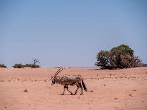 Namibia Mietwagen Rundreise Corona, Sossusvlei, Oryx, Afrika Erfahren