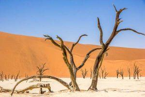 Namibia Mietwagen Rundreise Corona, Sossusvlei, Dead Vlei