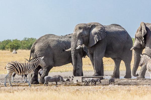 Afrika Erfahren, Etosha Nationalpark, Selbstfahrer, Westen, Elefant