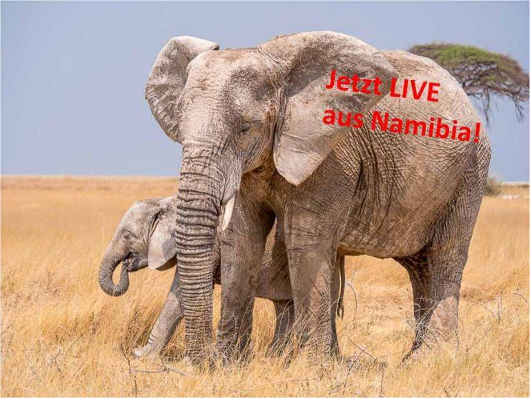 Selbstfahrer, Namibia, Corona, Etosha, Elefant